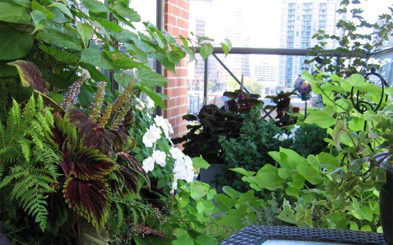 plantas jardim mediterraneoCria um jardim urbano em 4 etapas