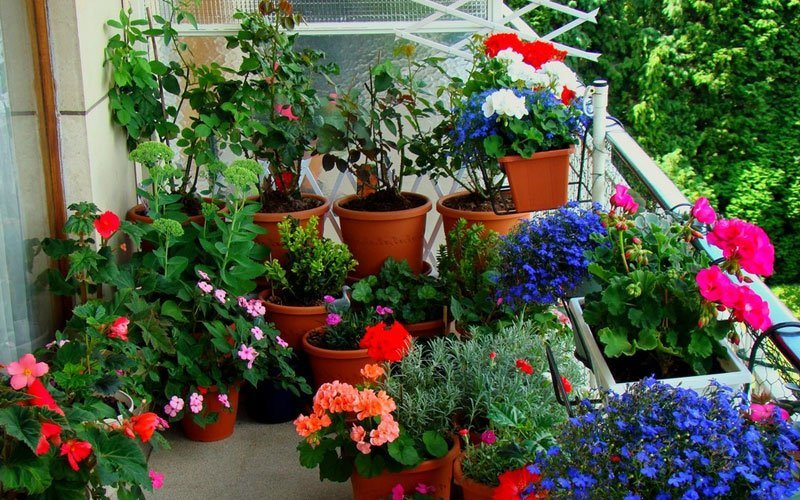 Cria um jardim urbano em 4 etapas decora o da casa Como organizar mi jardin