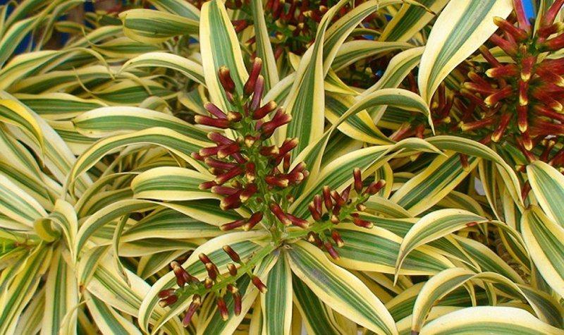 Plantas de interior decora o da casa for Plantas verdes de interior
