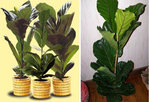 Plantas de interior decora o da casa Estanteria para plantas de interior