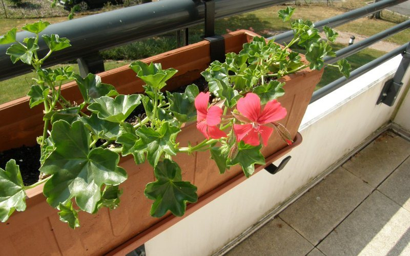 Cria um jardim na tua varanda decora o da casa - Como disenar una terraza jardin ...
